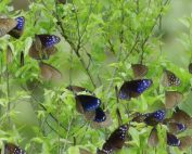 Chia-Lung Chan Is Using Video Data to Help Protect the Purple Butterfly Valley