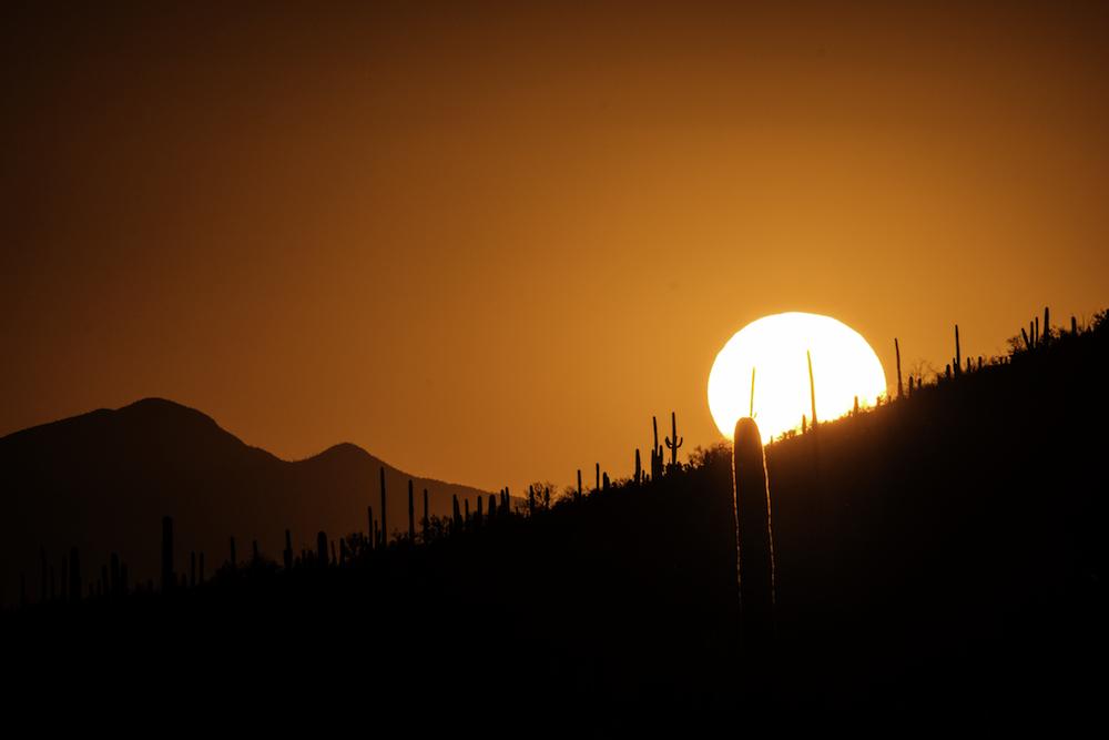 Jonathan Irish - Saguaro NP
